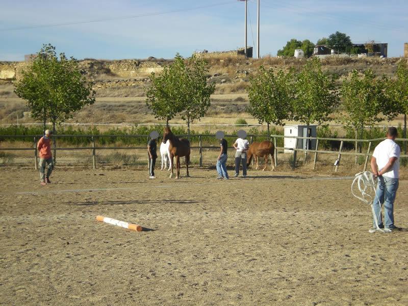 Sesión de Coaching con Caballos en la Fundación farasdués