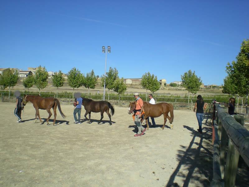 Sesión de Coaching con Caballos en Caballos de Martincho