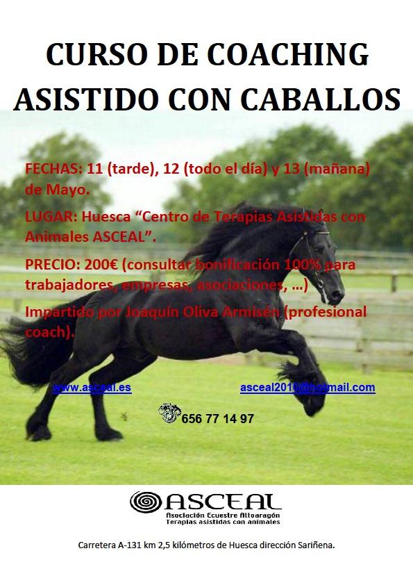 CURSO DE COACHING CON CABALLOS
